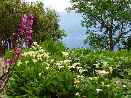 http://sobresuiza.com/wp-content/uploads/2009/07/flores-isole-di-brissago.jpg
