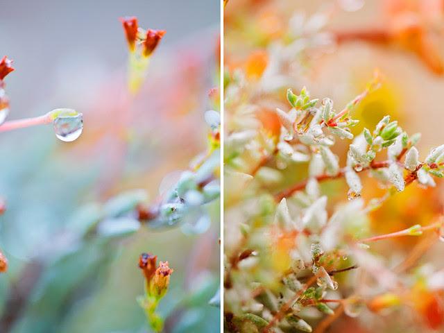 yesterday morning's raindrops