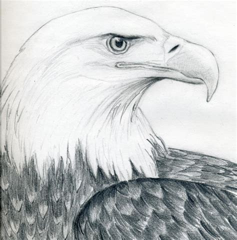 draw  bald eagle