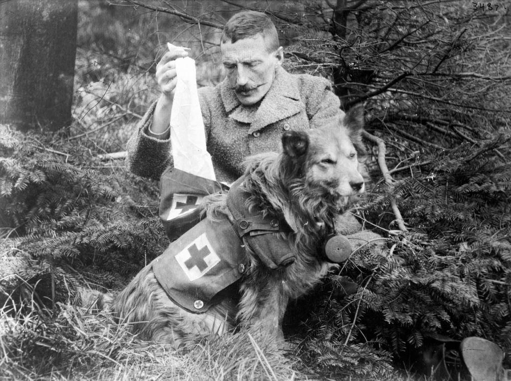 Os animais também lutaram na Primeira Guerra Mundial 04