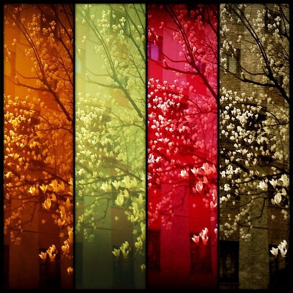 ezrazHipsta | springtime | mosaic collage + blossoms + orange green red brown