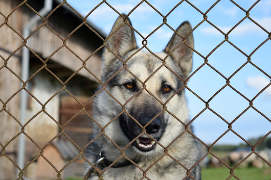 3 Ways to Stop Your Dog from Barking Through the Fence - Dog Training Advice Tips