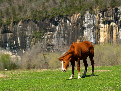 Steel Creek horse