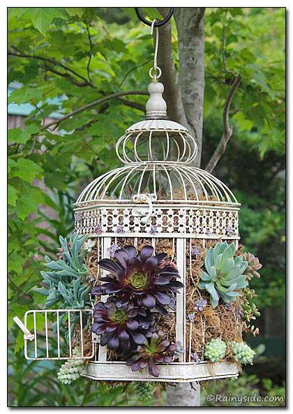 Bird Cages and Succulents - Rainyside.com