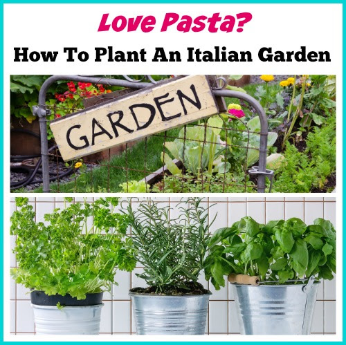 Love pasta? Here's How To Plant An Italian Garden