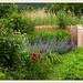 Garten Schawerda 2013-06