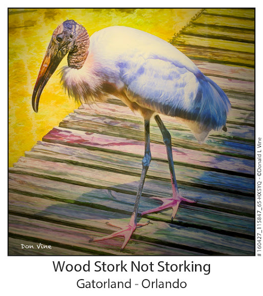 BUS | Wood Stork Not Storking_160427_115847_65-HXSYQ
