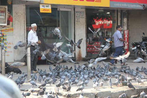 feeding pigeons is better than feeding man by firoze shakir photographerno1