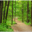 Nature walks can help restore the mind | SlowTech
