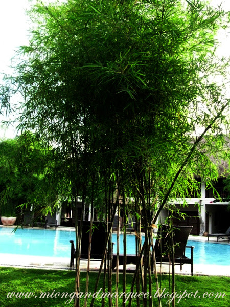 Maribago Bluewater Beach Resort Cebu