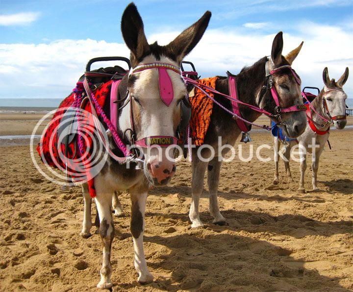 photo Praia-da-Manta-Rota_zps667b9882.jpg