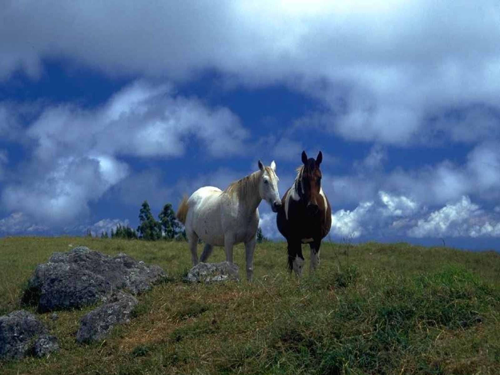 kostenlose pferdebilder f r
