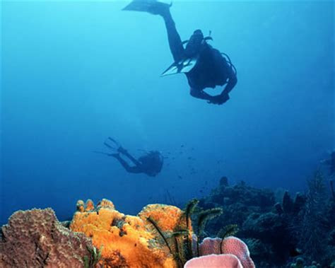 Champagne Dominica   Champagne Reef   Best Snorkeling in