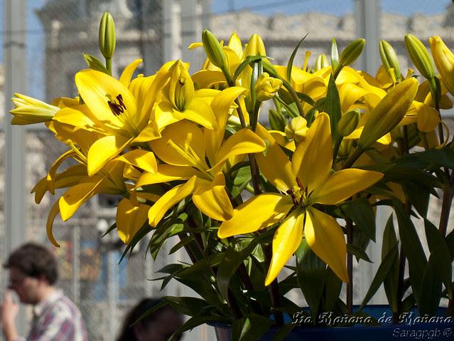 Semana 12 - Flores