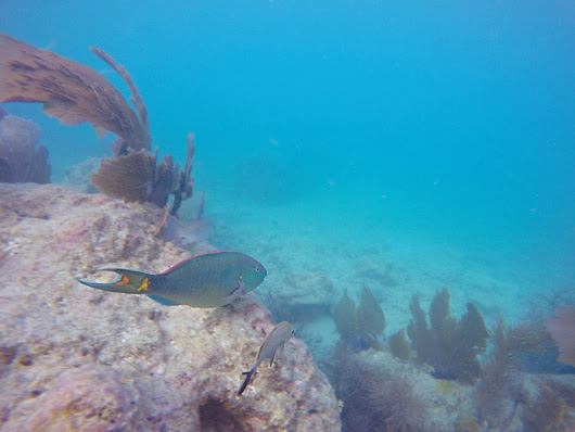 Snorkeling Key West Ethically- Our Guide to the Southernmost Points Underwater World