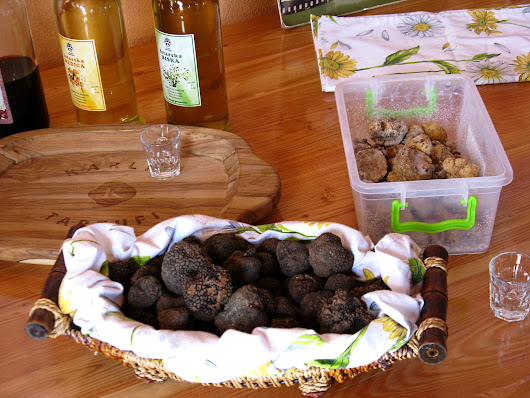 The Tasty Truffles of Istria - The Incredibly Long Journey