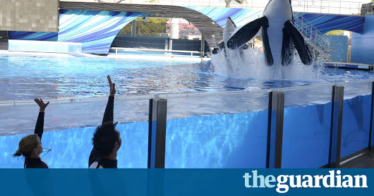 Tilikum, SeaWorld killer whale shown in Blackfish documentary, dies after illness | US news | The Guardian