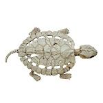 Skeleton Turtle Halloween Decoration