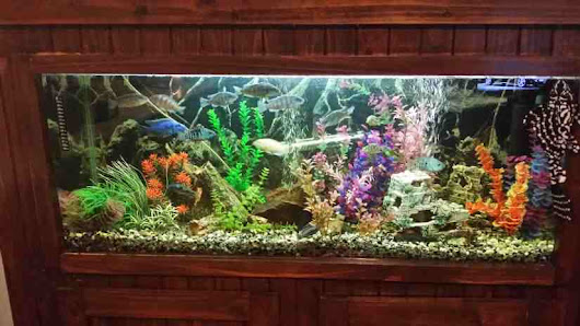 Fully Enclosed Cichlid Tank | Tropical Fish Site