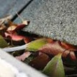 Is Cleaning Gutter Guards Useful or a Big Waste of Time?