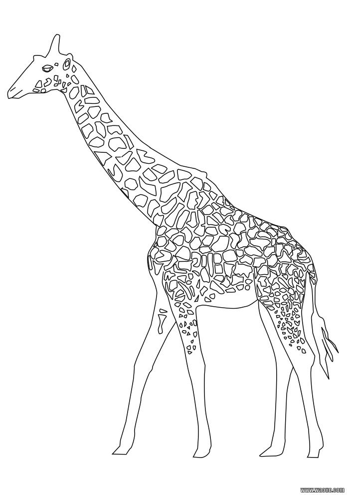 Coloriage Girafe Gratuit à Imprimer