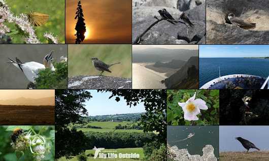 #30DaysWild - Some Final Thoughts