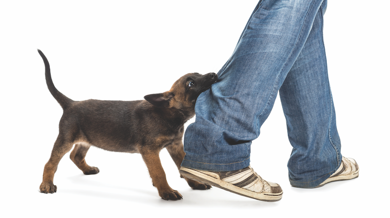 how to treat injuries from dog fights