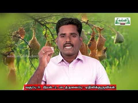 11th Tamil ஏதிலிக்குருவிகள் இயல் 2 Part  2 Kalvi TV