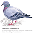 What Pigeons Teach Us About Love - Issue 33: Attraction - Nautilus