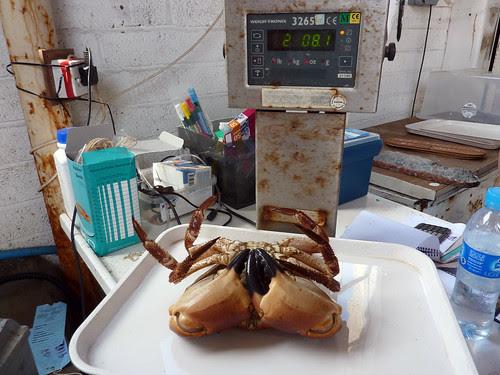 Crab scales