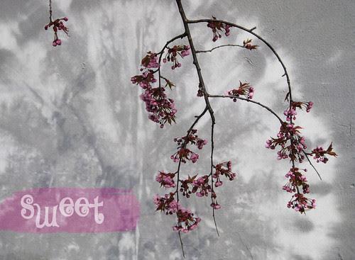 sweet flower :: søt blomst
