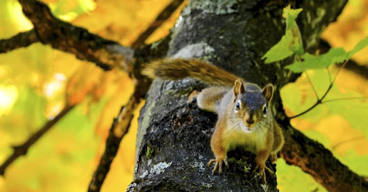 Squirrel Life | Conciliar Post