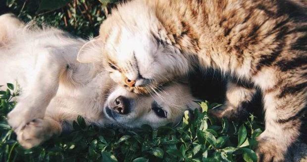 ¿Por qué se pelean gatos y perros?
