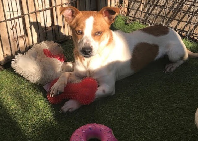 Sophie – 1 year old female Cross-Breed