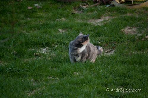 Possum Grazing-1.jpg