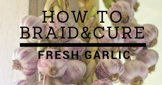 How to Braid and Cure Fresh Garlic