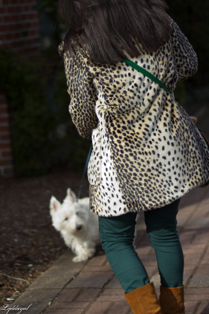 the leopard, the gingham and the westie-1.jpg