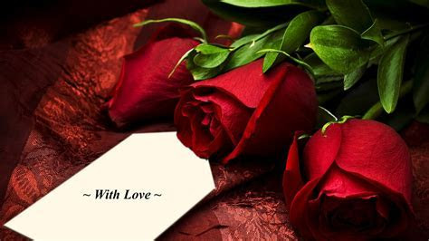 50 Beautiful Red Rose Images To Download ? The WoW Style