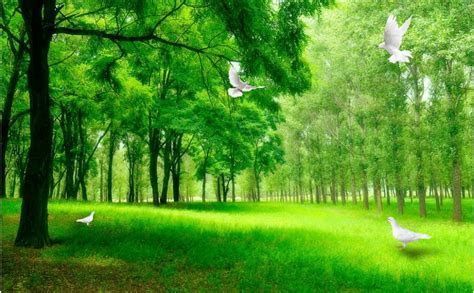 3d Background Images Nature