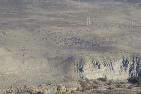 Geoglifos del desierto de Atacama (Chile). | Ecoarqueología