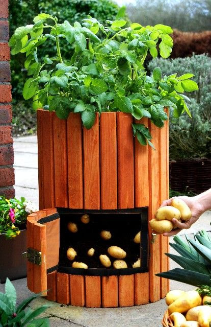Unique Vegetable Gardens - Home Decor Designs