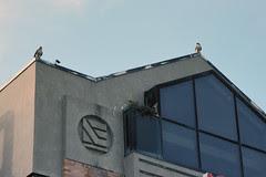hawk nest 3
