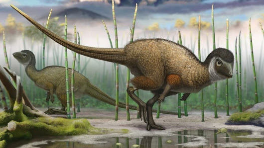 New view of dinosaurs could radically reshape their family tree