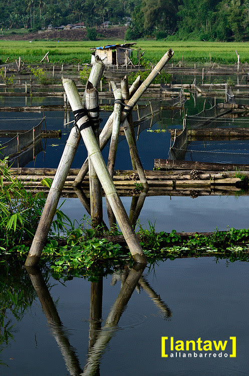 Lake Seloton: Bamboo Cages