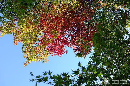 Fuji_X100_color_10