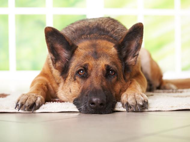 perierga.gr - 20 πράγματα που δεν πρέπει να ξεχνάμε όσοι αγαπάμε τα σκυλιά