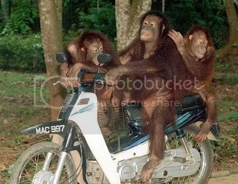 rempit Pictures, Images and Photos