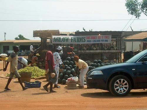 Market scene - Agloo Farms