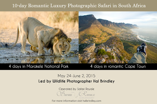 Hal Brindley Wildlife Photography  » I've Been Invited to Lead a Photographic Tour in South Africa!