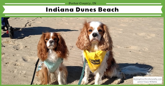 Dog-Friendly Indiana Dunes Beaches | Dog-Friendly Road Trip